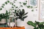 kamerplanten die voor koelte zorgen